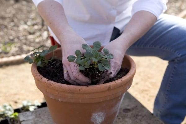 آشنایی با خاک مناسب جهت تعویض خاک گلدان