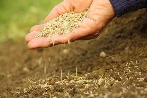 روش کاشت بذر چمن در خاک
