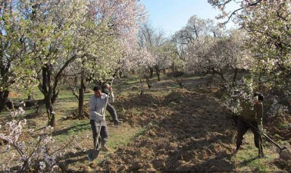 بهترین زمان کوددهی به درختان میوه