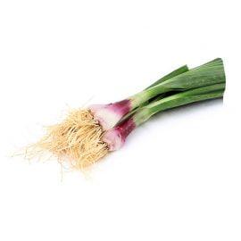 بذر پیازچه قرمز