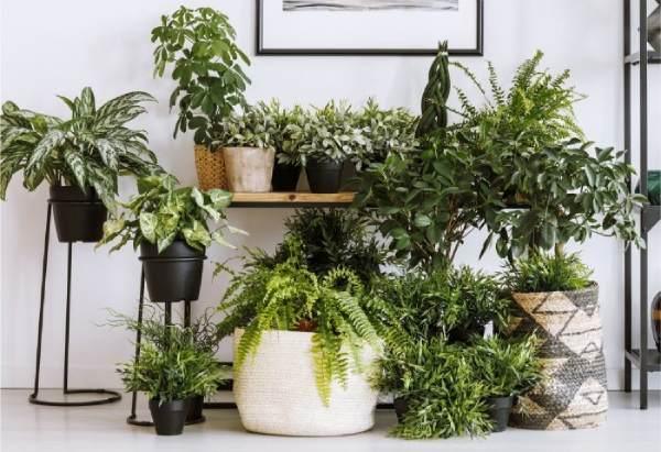 نشانه های کاهش رطوبت در گیاهان