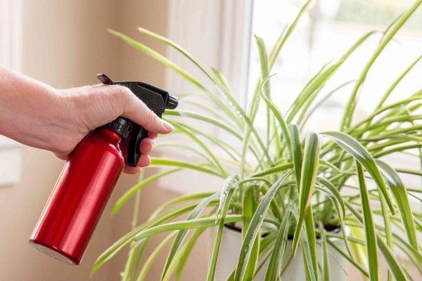 راه های تامین و افزایش رطوبت هوا برای گیاهان