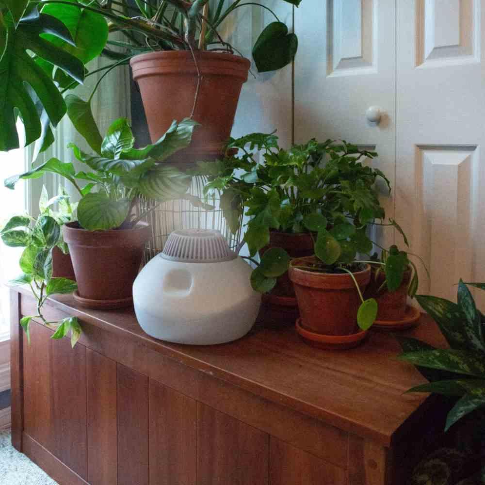 راه های افزایش رطوبت هوا برای گیاهان