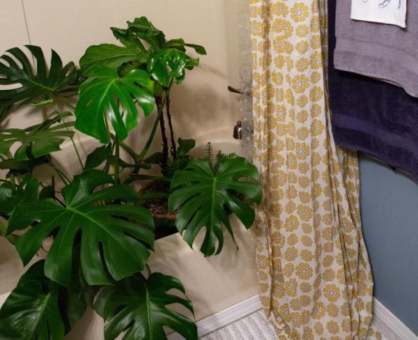 قرار دادن گیاهان آپارتمانی در حمام خانه
